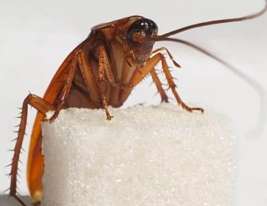 Как навсегда избавиться от тараканов