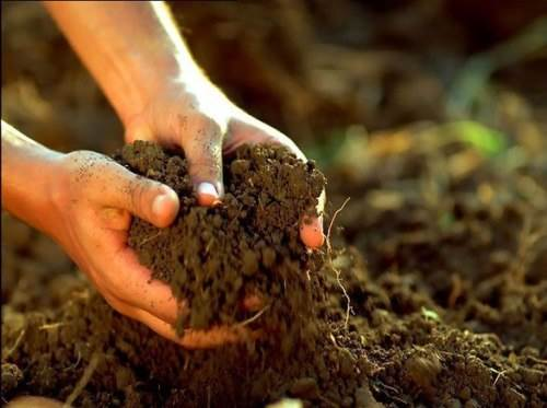 Виды почвогрунта
