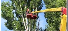 Как проводится спил деревьев с автовышки