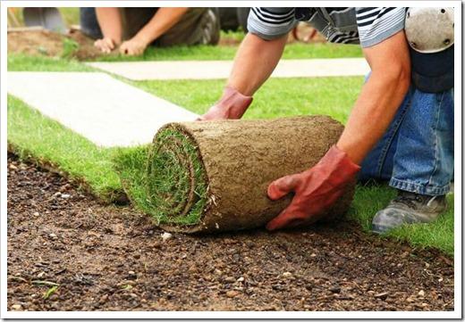 Правила выбора рулонов газона